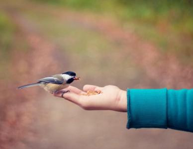 Fazer o bem: a importância de dividir o que possuo